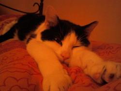 Crispy, chat Gouttière