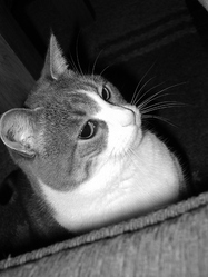 Croquette, chat Gouttière