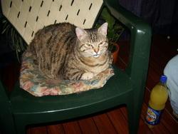 Crotouille, chat Gouttière