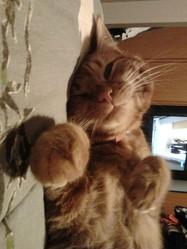 Crunch, chat Gouttière