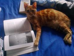 Cupidon, chat Gouttière
