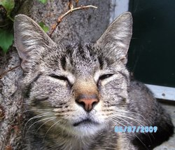 Curieuse, chat