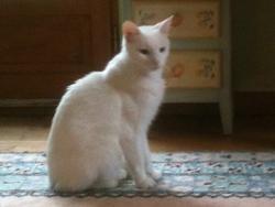 Cyrano, chat