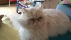 Cyrano , chat