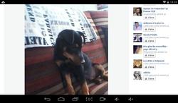 D'Jeff, chien Jack Russell Terrier
