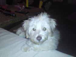 Coconut, chien
