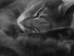 Crystal, chat Gouttière