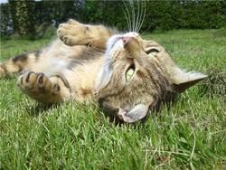 Chloé, chat Gouttière