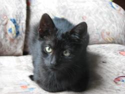 Fiona, chat Gouttière