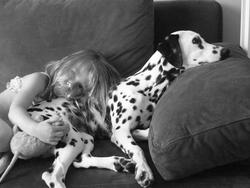 Falbala, chien Dalmatien