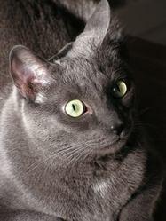Chap'oh, chat Gouttière