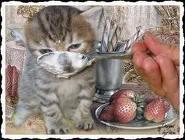 Maxoue, chat Gouttière