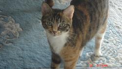Gini, chat Gouttière