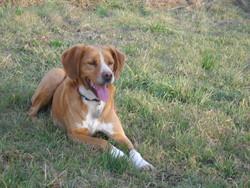Athos, chien