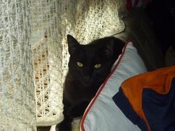 Noirot, chat