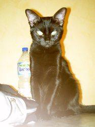 Jazzy, chat Gouttière