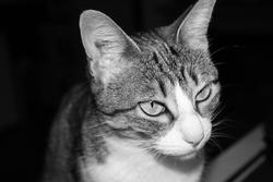 Zahia, chat Gouttière