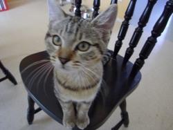 Mimine, chat Gouttière