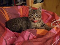 Ekiss, chat Gouttière