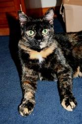 Jadzia, chat Gouttière