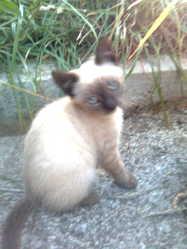 Baileys, chat Gouttière