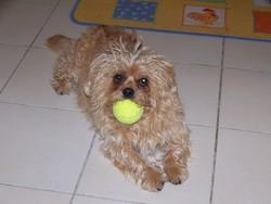 Vickie, chien