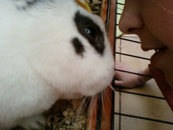 Molly, rongeur Lapin