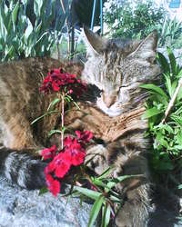 Ninie, chat Gouttière