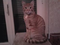 Sacha, chat