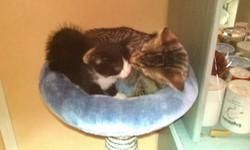 Tigrou Et Mimi, chat