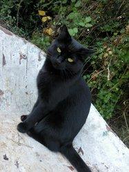Musette, chat Gouttière