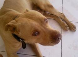 Kayser, chien