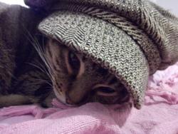 Pégase, chat Gouttière