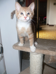 Dagobert, chat