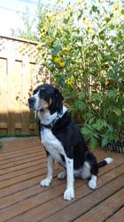 Daisy, chien