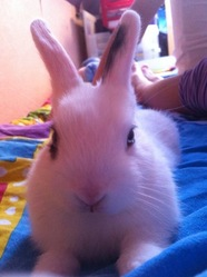Daisy, rongeur Lapin