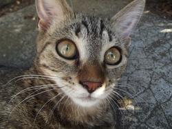 Daisy En Paix, chat Gouttière