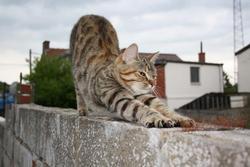 Daisy Au Paradis Des Chats, chat