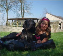 Dalhi, chien Dogue allemand