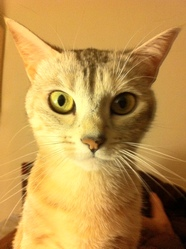 Dalie, chat