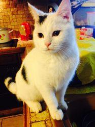 Leblanc, chat