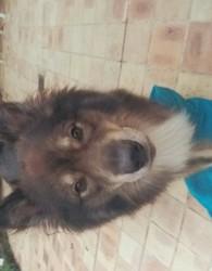 Dalton, chien