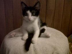 Damien, chat Gouttière