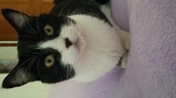 Damon, chat Gouttière