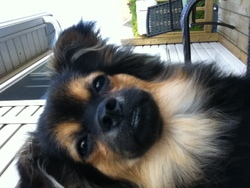 Damon, chien