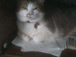 Dana, chat Gouttière