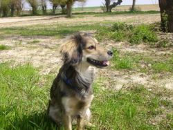 Daphné, chien