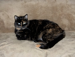 Daphnée, chat