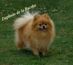 Daphnée De La Bascka, chien Spitz allemand