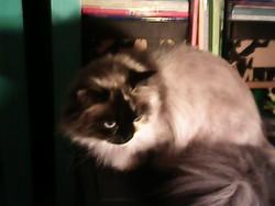 Daphné, chat